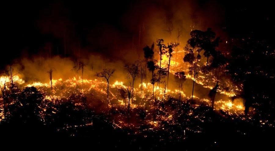 Queimadas na Floresta Amazônica devem registrar recorde em 2020 | Diário de  Goiás